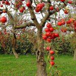 Выведение новых сортов плодовых культур
