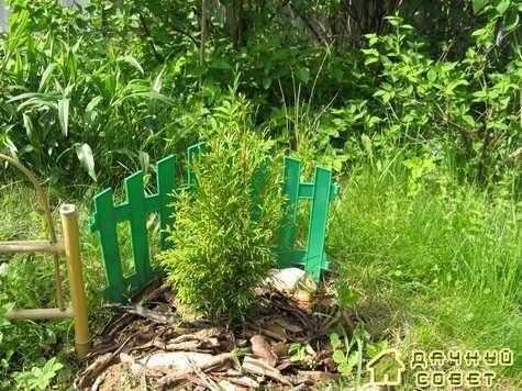 Посадка растений в саду без ошибок