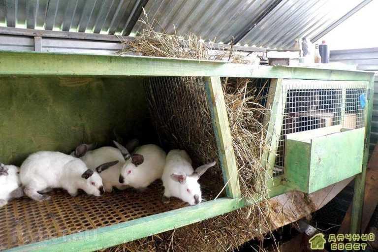Кролиководство.Содержание кроликов