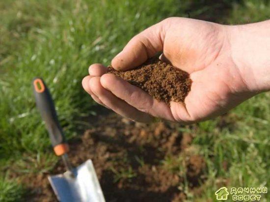Почва для картофеля. Общая характеристика