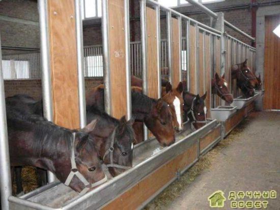 Коневодство. Разведение и выращивание лошадей