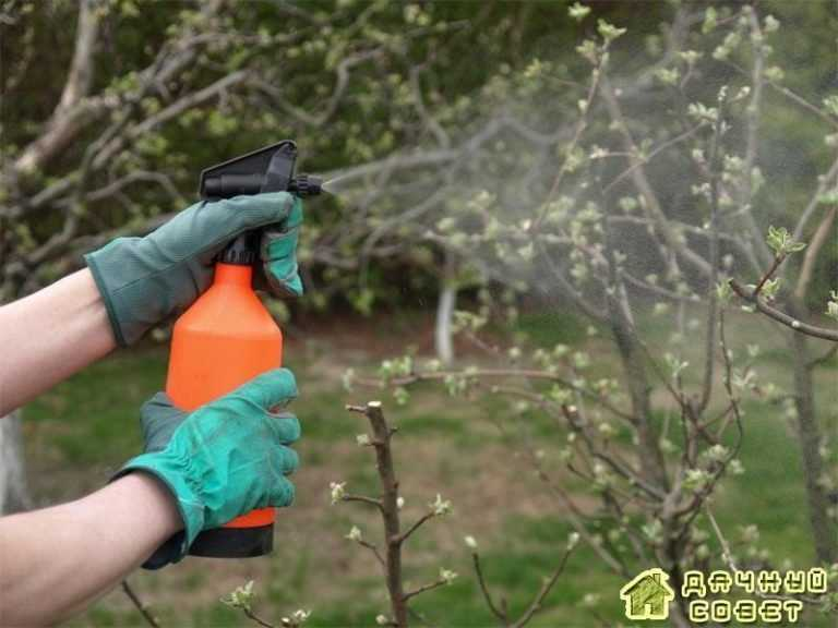 Система мероприятий по защите от вредителей и болезней плодовых, ягодных культур и винограда