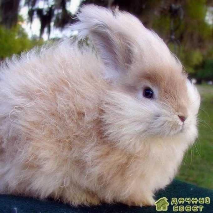 Породы кроликов (с фото)