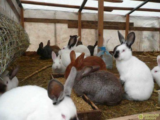 Кролиководство. Разведение и выращивание кроликов