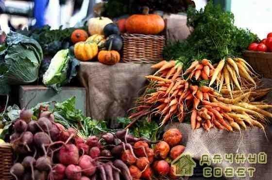Правильное хранение моркови и свеклы