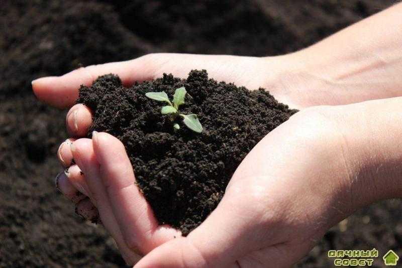 Восстанавливаем плодородие почвы