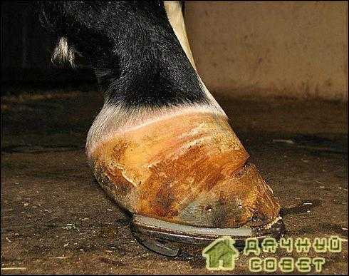 Коневодство. Профилактика, лечение заболеваний лошадей