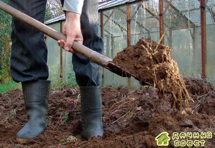 Способы улучшения почвы для выращивания картофеля. Весенняя обработка почвы