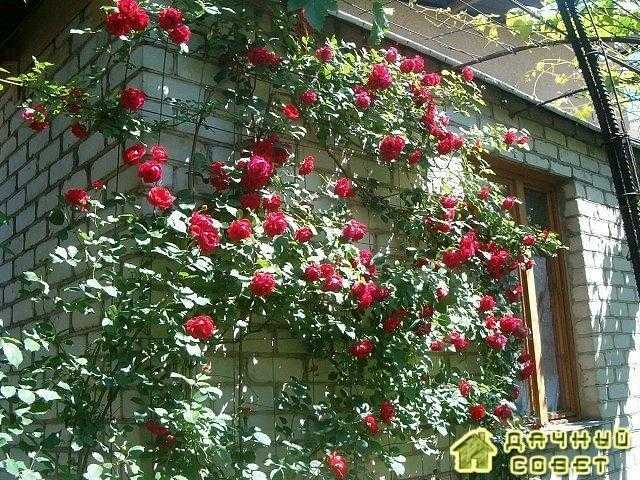 Когда снимать укрытия с цветов после зимы?