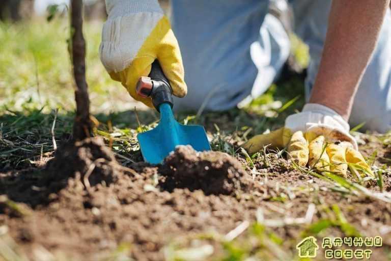 Осенняя подкормка-залог будущего урожая
