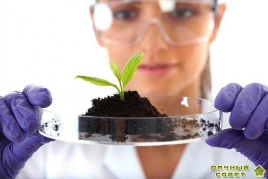 Регуляторы роста и пестициды