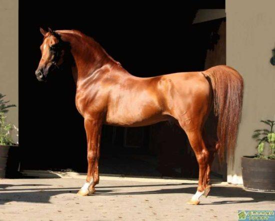 Коневодство. Породы лошадей (с фото)
