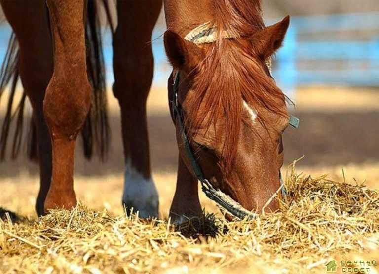 Коневодство. Содержание и кормление лошадей