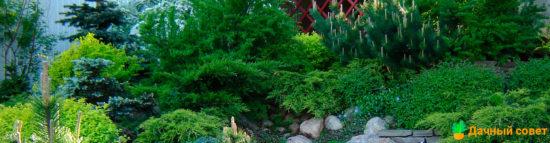Озеленение наклонных приусадебных участков: какие растения посадить на склонах?
